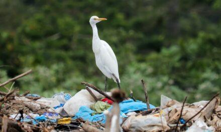 Miles de voluntarios participarán desde este sábado en una gran recogida de residuos
