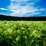 Es hora de apoyar la agricultura campesina