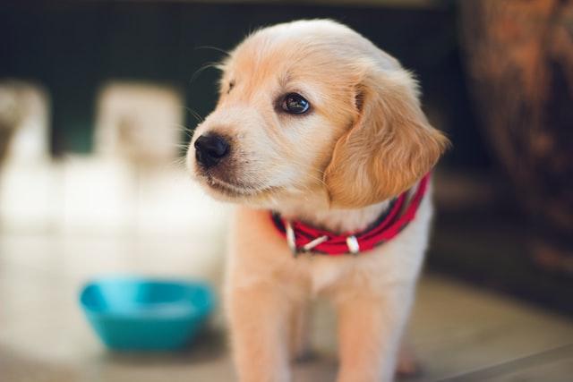 Los cachorros de perro nacen preparados para comunicarse con las personas