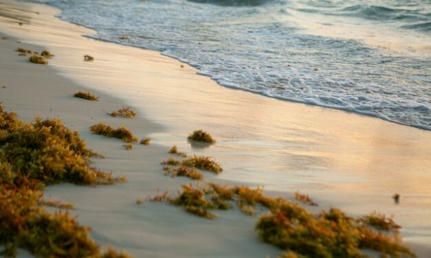 Aprovechamiento de los residuos del alga invasora como biocombustibles y biofertilizantes